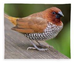 Brown Bird Fleece Blanket