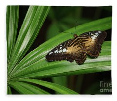 Brown Clipper Butterfly -parthenos Sylvia- On Frond Fleece Blanket