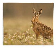 Brown Hare  Fleece Blanket