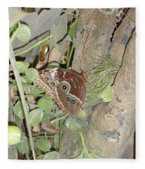 Brown Eyed Butterfly Fleece Blanket