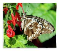 Brown Swallowtail Butterfly Fleece Blanket