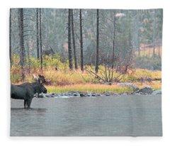 Bull And Cow Moose In East Rosebud Lake Montana Fleece Blanket