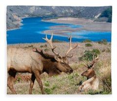 Bull Elk Above Tomales Bay Fleece Blanket