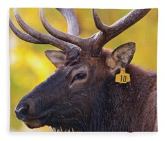 Bull Elk Number 10 Fleece Blanket