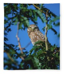 Burrowing Owl Sitting In A Tree Fleece Blanket