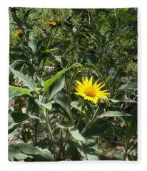 Burst Of Sun Flower Fleece Blanket