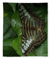 Butterfly 4 Fleece Blanket