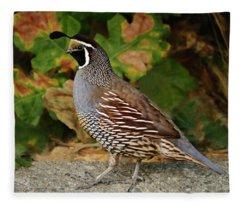 California Quail Rooster Fleece Blanket