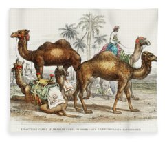 Camels From A History Of The Earth And Animated Nature Fleece Blanket