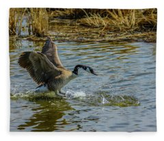 Canada Goose Takes Flight, Frank Lake, Alberta, Canada Fleece Blanket