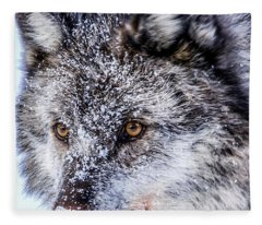 Canadian Grey Wolf In Portrait, British Columbia, Canada Fleece Blanket