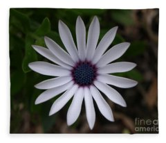 Cape Daisy Fleece Blanket