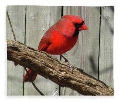 Cardinal Waiting For Spring Fleece Blanket