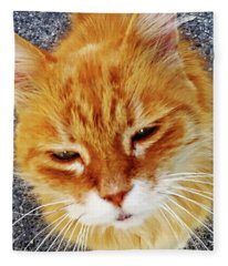Cats Of Amalfi - Amalfi, Italy Fleece Blanket