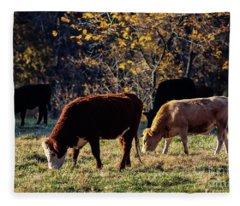 Cattle Grazing In Sunlight  Fleece Blanket