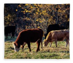 Cattle Grazing In Sunlight  Fleece Blanket