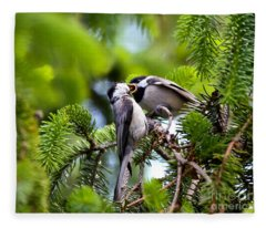Chickadee Feeding Time Fleece Blanket