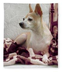Chihuahua Chiqui  Portrait  Fleece Blanket