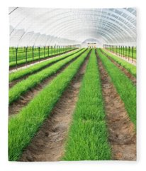 Chives Growing In Greenhouse Fleece Blanket