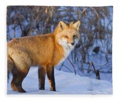 Christmas Fox Fleece Blanket