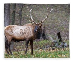 Classic Pose Fleece Blanket