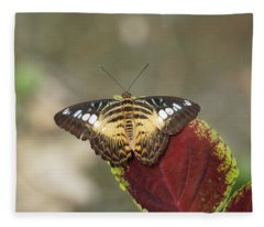 Fleece Blanket featuring the photograph Clipper Butterfly by Paul Gulliver