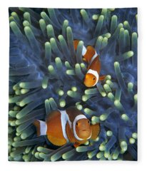 Clown Anemonefish Amphiprion Ocellaris Fleece Blanket