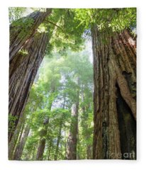 Coastal Redwoods  Fleece Blanket