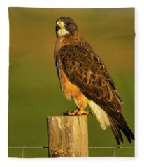 Colorado Swainson's Hawk Fleece Blanket