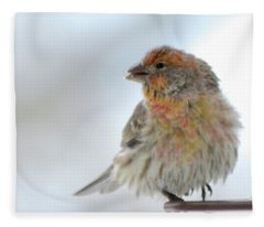 Colorful Finch Eating Breakfast Fleece Blanket