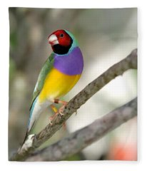 Colorful Gouldian Finch Fleece Blanket