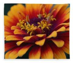 Colorful Zinnia 1 Fleece Blanket