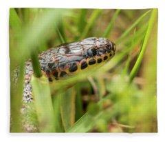 Common Rainbow Snake In The Grass Fleece Blanket