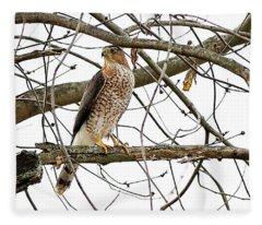 Cooper's Hawk In Old American Elm Tree Fleece Blanket