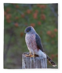 Coopers Hawk Perched Fleece Blanket