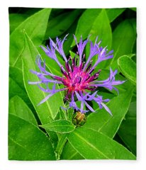 Centaurea Montana Fleece Blanket