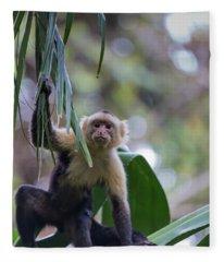 Costa Monkey 3 Fleece Blanket