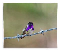 Costa's Hummingbird Fleece Blanket