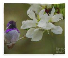 Costas Hummingbird On An Anacacho Orchid Branch Fleece Blanket