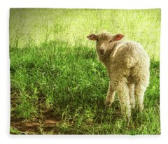 Cotswold Sheep Fleece Blanket