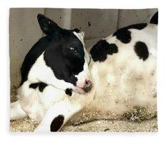 Cow Cutie Fleece Blanket