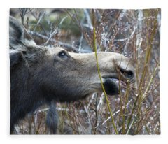 Cow Moose Dining On Willow Fleece Blanket