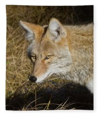 Coyote In The Wild Fleece Blanket