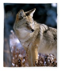 Coyote In Winter Light Fleece Blanket