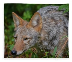 Coyote On The Hunt Fleece Blanket