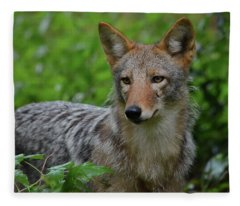 Coyote On The Prowl  Fleece Blanket