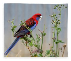Crimson Rosella Fleece Blanket