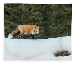 Curiosity Abounds Fleece Blanket