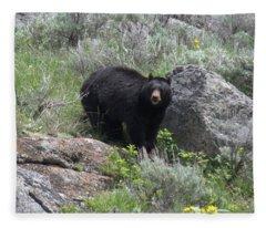 Curious Black Bear Fleece Blanket