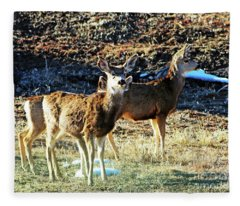 Curious Mule Deer Yearlings  Fleece Blanket